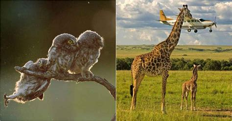 The Funniest Entries From The Comedy Wildlife Photography