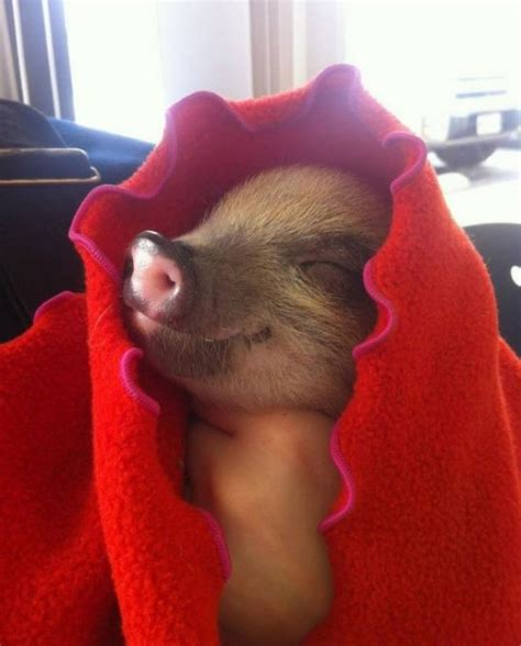 National Pigs-In-A-Blanket Day   Pigs-In-A-Blanket