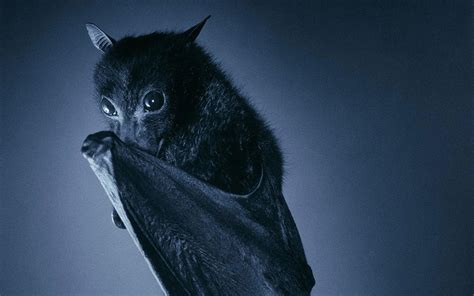 Bat Computer Background Download Free   Page 3 of 3