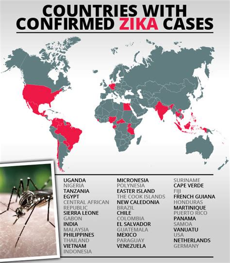 Is Zika Virus an EPIDEMIC? WHO call summit amid fears of