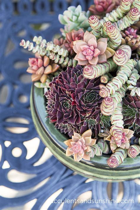 Succulents and Sunshine | Care, Propagation and Projects